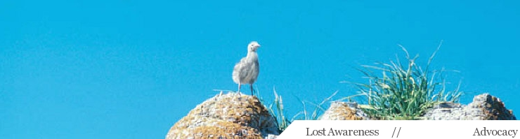 Advocacy Page Header image, showing a baby sea gull on a rocky point on a clear day